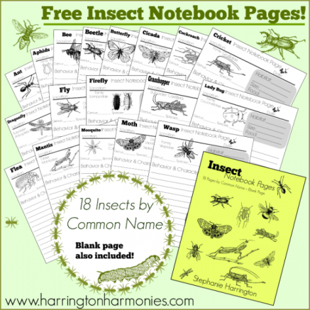 Free-Insect-Notebook-Pages